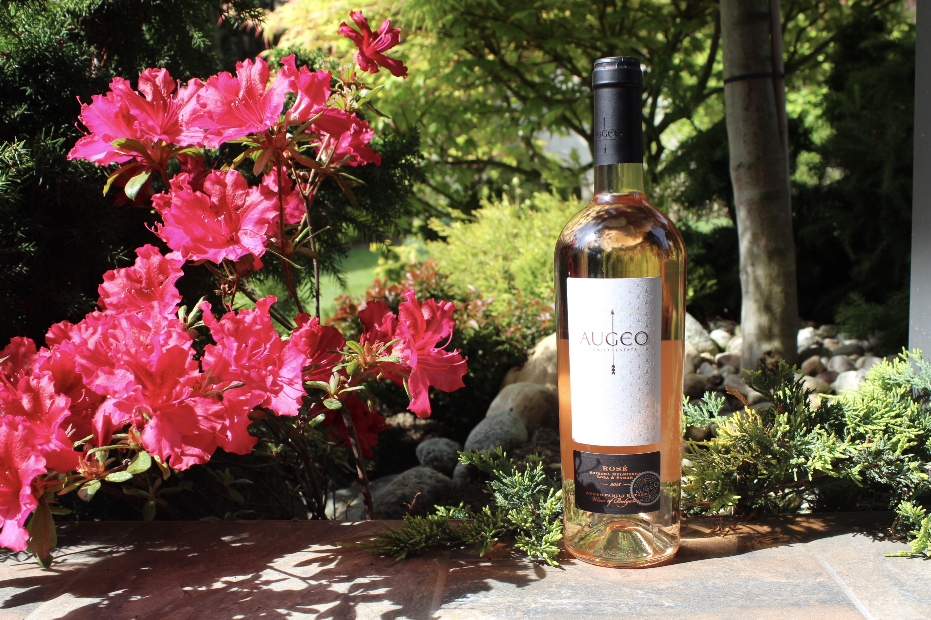 Premiere for Augeo Rose 2018